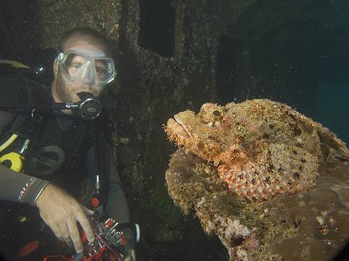 Scorpion fish, Palau Weh