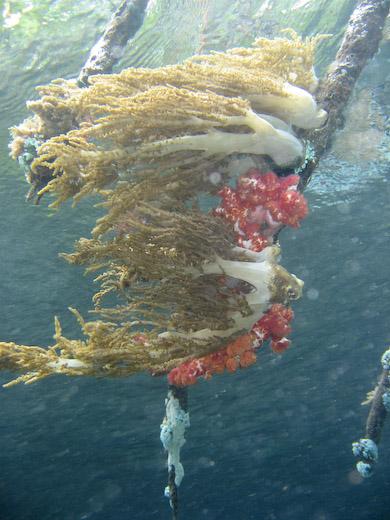 Raja ampat to triton bay liveaboard trip report dive happy - Raja laut dive resort ...