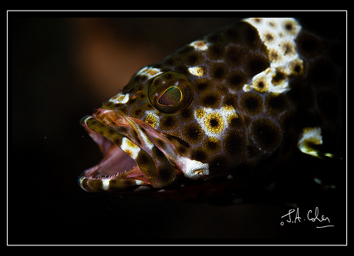 Big Mouth, Bali