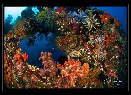Coral Wreck, Bali