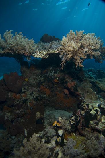 Nusa Laut Seascape