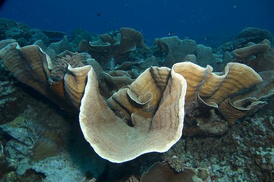 Nusa Laut Scuba Diving – Banda Islands, Indonesia