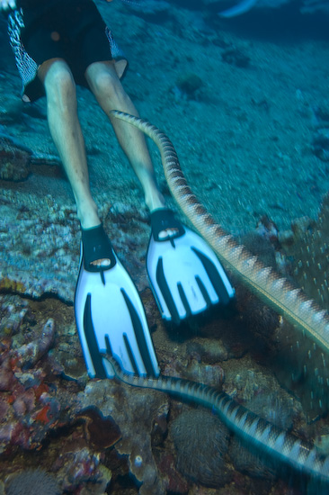 Sea Snakes Investigating Contents Of Cedric's Boardshorts