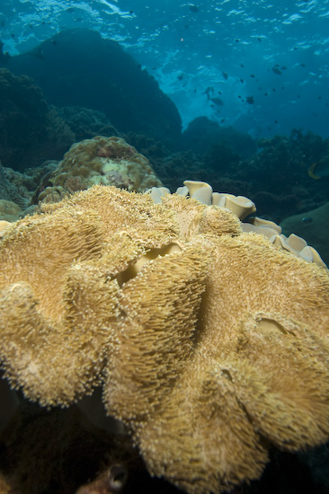 Sponge Corals And Sea Surge at Manuk, Banda Sea