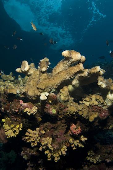 Corals And Sea Surge at Manuk, Banda Sea