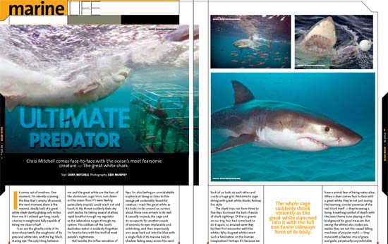 "The original Asian Diver magazine Great White Shark ""The Ultimate Predator"" article"