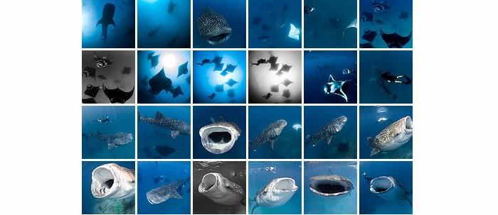Hanifaru – Where Manta Rays And Whale Sharks Meet