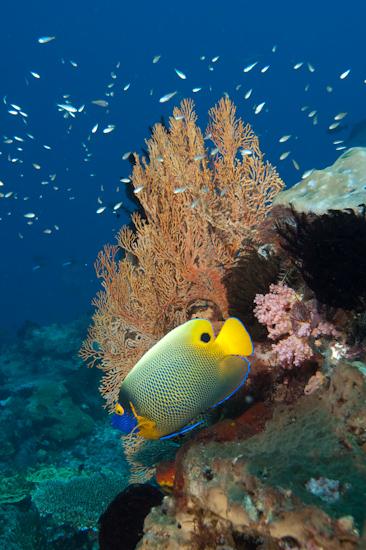 Reef Scene, Castle Rock