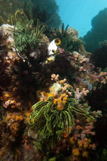 Yellow Wall, Horseshoe Bay, Komodo © Chris Mitchell
