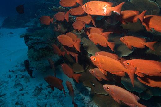Palau Scuba Diving Liveaboard – Day Two