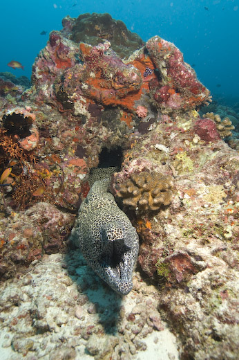 Maldives Diving Trip Report: Bandos Resort