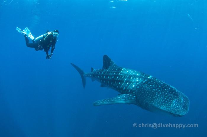 Cenderawasih Bay – Whale Shark Capital Of The World