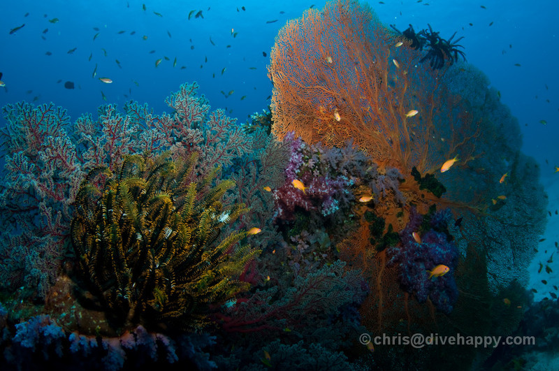 Phuket Diving – A Quick Guide