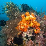 Best Scuba Diving In Indonesia