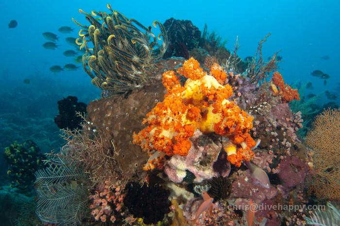 Best Scuba Diving In Indonesia