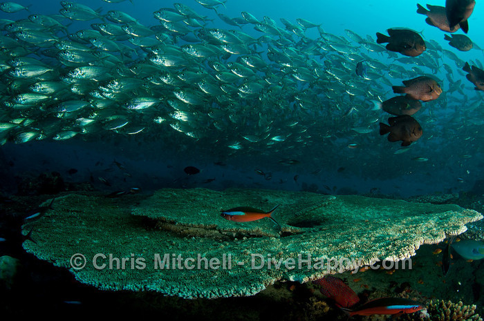 Best Scuba Diving In The Maldives
