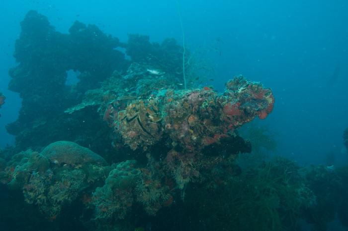 Palau Diving: Size Does Matter