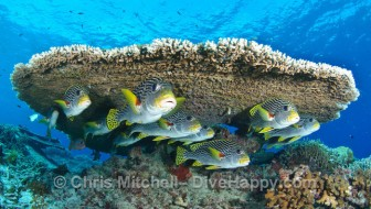 Tubbataha Reef Liveaboard Diving – Trip Report June 2011