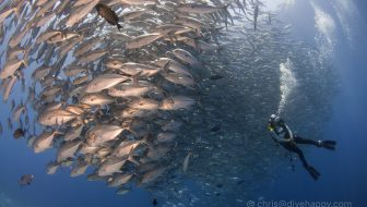 Diving Tubbataha Reef: A Quick Guide