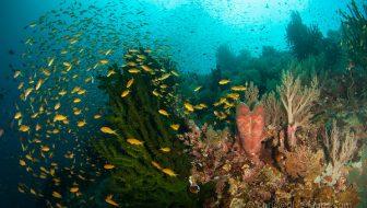 Diving Sogod Bay 2017